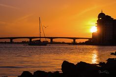 Sunset over Sarasota Bay with the Ringling Causeway Bridge and the beautiful, domed Italian Renaissance buildings at Golden Gate Point silhouetted against a brilliant orange sky. The sky and water turned orange and gold and a single Brown Pelican is flying off to his evening roost.  Bayfront Park on Sarasota's downtown waterfront is a lovely place from which to watch the people, birds, boats, and, of course, the sunset. More coastal photography and art at www.susan-molnar.pixels.com.