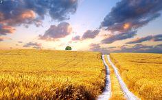 champ de blé | Télécharger l'image