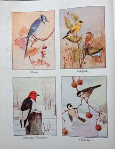 Our Bird Neighbors Beautiful Vintage by oldstuffinboxes on Etsy, $13.00