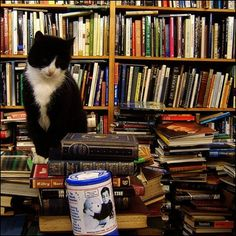 I think every bookstore should have a kitty, don't you?