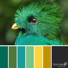 Great color inspiration. I will be using this website to choose colors for my next project! yellow green turquoise