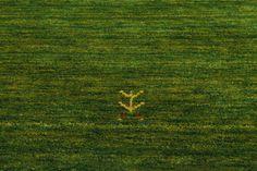 Gabbeh Loom - Groen 200x200 - RugVista