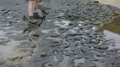 Foot prints in Norfolk are supposed to be 800.000 years old.