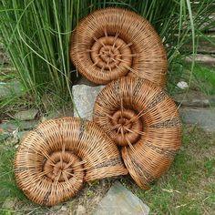 ракушки. Shell willow