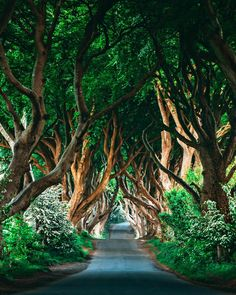 The Dark Hedges 💚 Northern Ireland Congrats Use Dark Hedges Ireland, Landscape Photography, Travel Photography, Photography Ideas, Famous Castles, Amazing Destinations, Northern Ireland, Wonderful Places, Places To See