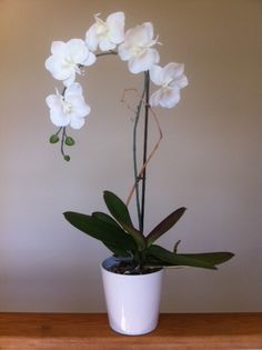 White Orchid--good indoor plant that's perfect for that chic look. Might go for one of my pottery pinned containers.