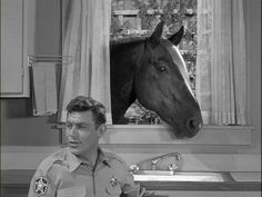 Andy and a horse ! Vintage Tv, Vintage Hollywood, Barney Fife, Jack Benny, The Andy Griffith Show, Good Old Times, Great Tv Shows, Pretty Horses, Old Tv