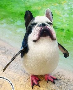 Animal mash ups. I must have been working too much this week bc im finding this so hilarious Cute Funny Animals, Funny Cute, The Funny, Hilarious, Ugly Dogs, Weird Dogs, Photoshopped Animals, Animal Mashups, Funny Photoshop