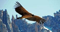 nice 25 Largest Birds Of Prey That Are Pretty Awesome (While Kind Of Scary)