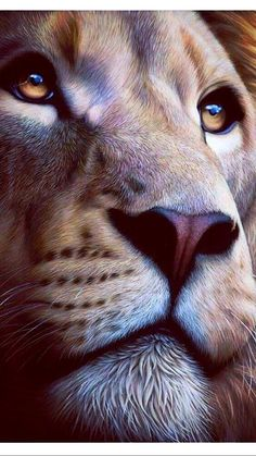 Crowdfunding Ideas of Crowdfunding - Crowdfunding - Ideas of Crowdfunding - Entire eyes ! Crowdfunding Ideas of Crowdfunding Entire eyes ! Lion King Art, Lion Of Judah, Lion Art, Lion Images, Lion Pictures, Beautiful Cats, Animals Beautiful, Cute Animals, Lion Wallpaper