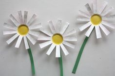 Paper_Cup_Daisies