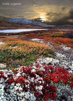 Norwegian Mountains in Telemark