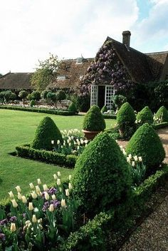 Spring Tulips and Topiary in a formal garden - Chenies Manor House Buckinghamshire Boxwood Garden, Topiary Garden, Boxwood Hedge, Formal Gardens, Outdoor Gardens, Outdoor Sheds, Beautiful Landscapes, Beautiful Gardens, Amazing Gardens