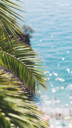 palme-meer-summer-wallpaper-iphone-7 | duni.cheri