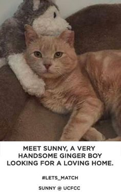 Sunny is an adoptable Tabby - Orange searching for a forever family near Union City, NJ. Use Petfinder to find adoptable pets in your area.