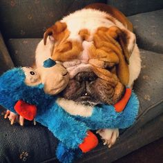"There's so much educ stuff in my box!  AH- needed some CUTE! ""Monkey"" cuddling with his best friend, Bulldog."