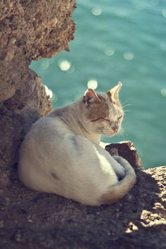 We can learn so much about enjoyment & appreciation of life from animals, especially Cats!  We're here to learn, grow evolve, appreciate and reciprocate!