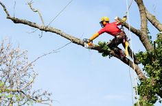Why hire a Certified Arborist? Check out 5 Reason behind hire an Arborist from Treezy Tree Services - Your Local Brisbane Southside Expert Arborists http://treezyptyltd.livejournal.com/669.html  #arborist #Arborists #CertifiedArborist #CertifiedArborists  #arboristBrisbane #ArboristsBrisbane #CertifiedArboristBrisbane #CertifiedArboristsBrisbane  #arboristBrisbaneSouthside #ArboristsBrisbaneSouthside #CertifiedArboristBrisbaneSouthside #CertifiedArboristsBrisbaneSouthside