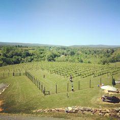 Barrel Oak Winery in Delaplane, VA