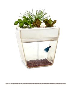 AquaFarm - Self-cleaning fish tank that grows plants - fun ecosystem. Best thing ever!