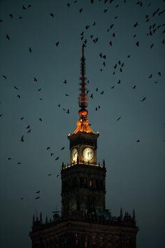 flying birds, palace of culture, Warszawa, Warsaw, Poland, capital of Poland, photo: Grzegorz Press