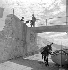Artur Pastor Portugal, Old Pictures, Vintage Images, Portuguese, Greece, Horses, Black And White, Photography, Animals