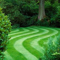 The Top 10 Perfect Lawn Maintenance Tips: How to Grow Greener Grass - Our best projects, hints and tips to help you create and maintain a perfect lawn and yard year-round. Read more: http://www.familyhandyman.com/landscaping/the-top-10-perfect-lawn-maintenance-tips