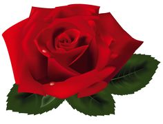 image of clip art red rose 7092 red roses clip art images free rh pinterest com red rose clipart png red rose bouquet clipart free