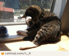 Think about my future. By L_K http://cmji.me/18jTBFP #cat #lol
