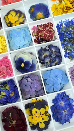 Flowers Discover Collection of pressed flowers Epoxy Resin Art, Diy Resin Art, Diy Resin Crafts, Diy Crafts To Sell, Dried And Pressed Flowers, Pressed Flower Art, Pressed Flowers Frame, Flower Crafts, Diy Flowers