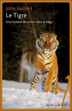 A tiger vendetta in the Taiga, awesome!