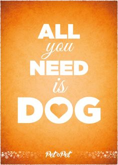 Amore. Love. Dog. Pet pet. San valentine's day. San valentino. In love. Cuore. Hearth. Animal. Animals. Dogs. Cats. San valentine.