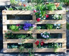 My vertical garden - I used an old pallet and old cans!