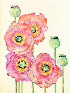 Poppies, ink and watercolors