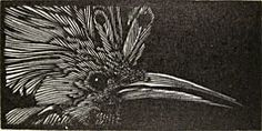 Barry Moser. Hoopoe, 1985. Wood engraving. AP. 1 x 2 inches. $100