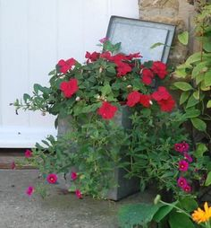 unusual planters ideas | stumbled across these great planting displays on my sunday morning ...