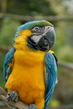 This page contains homemade parrot food recipes. Making your own parrot food can help save money and provide excellent nutrition.