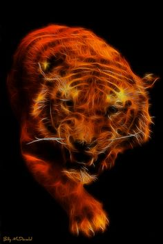 Year of the tiger Panther, Strongest Animal, Cool Illusions, Black Background Images, Tiger Art, Muse Art, Alien Art, Wild Creatures, Wildlife Art