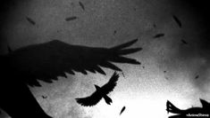 Discover & share this Crow GIF with everyone you know. GIPHY is how you search, share, discover, and create GIFs. Gifs, Wattpad, Raven Art, Aesthetic Gif, Dark Ages, Character Inspiration, Creepy, Anime Art, Animation