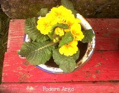 Un vecchio vaso da notte diventa un vaso per primule #reuse