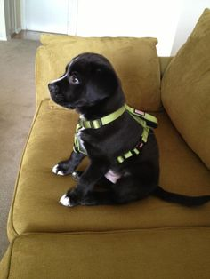 """Are you ready for walkies? they ask.  """"I was born ready for walkies."""""""
