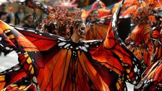 Women dressed as monarch butterflies dance during the day of the dead parade, Mexico, this year themed as migration Rainforest Butterfly, Hollywood Forever Cemetery, Ancient Aztecs, Butterfly Costume, México City, Monarch Butterfly, Day Of The Dead, Glamping, Carnival