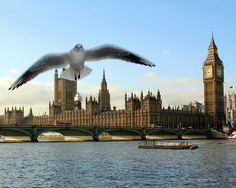 Surprise seagull in Westminster! by Tara.Quinn