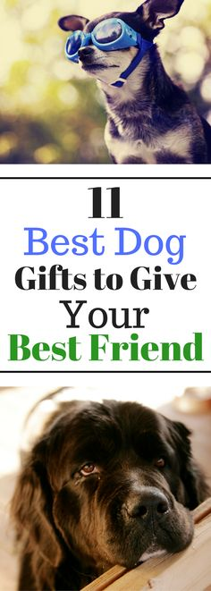 11 Best Dog Gifts to Give Your Best Friend