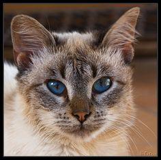 ✯ Love Blue Eyes. Ah...
