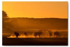 Kgalagadi part Kalahari wildlife Wildlife, Elephant, Photography, Painting, Animals, Inspiration, Art, Biblical Inspiration, Art Background