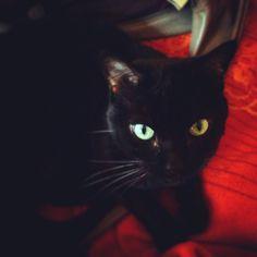 Minouche Cat   Pawshake Cork