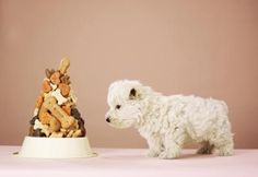 Food Ideas for a Littlest Pet Shop Party