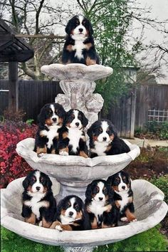 Pet Dogs, Dog Cat, Pets, Love Pet, Funny Dogs, Corgi, Kittens, Cute Animals, Birds