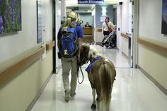 Minature #horse helps Colorado patients swing back into the saddle. Heartwarming story of #hospital animal therapy!